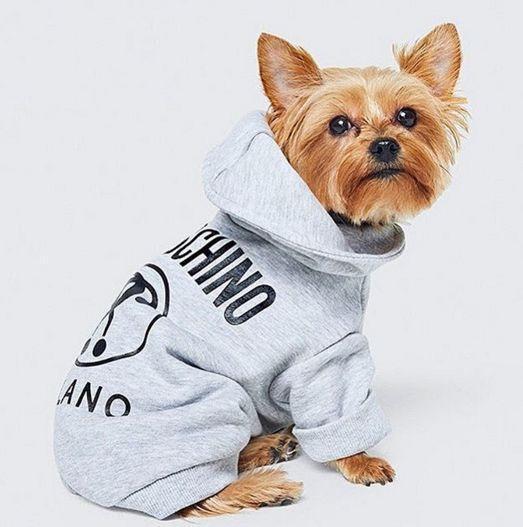 今年11月,快时尚服装品牌H&M将与意大利服装品牌Moschino合作推出宠物服装。 在发达国家,宠物被视为家庭成员一样的存在。在中国,宠物热也慢慢发酵。身边许多朋友成为猫奴、狗奴,并伴随抖音等短视频热潮,出现了云养的有趣现象。 在快时尚品牌服装销售低迷的情况下,H&M联手Moschino作出了一个突破:推出专门的宠物衣线。 Moschino的创意总监Jeremy Scott对这个创意很是满意,他在接受Vogue杂志采访时表示:一开始,H&M问我要不要做个童装线,