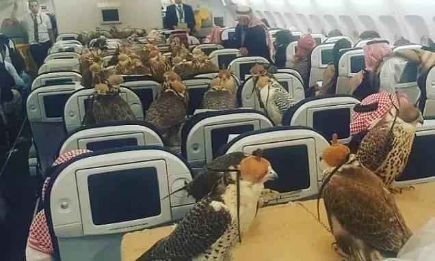 坐飞机自带黄金电梯,炫富我只服沙特国王~