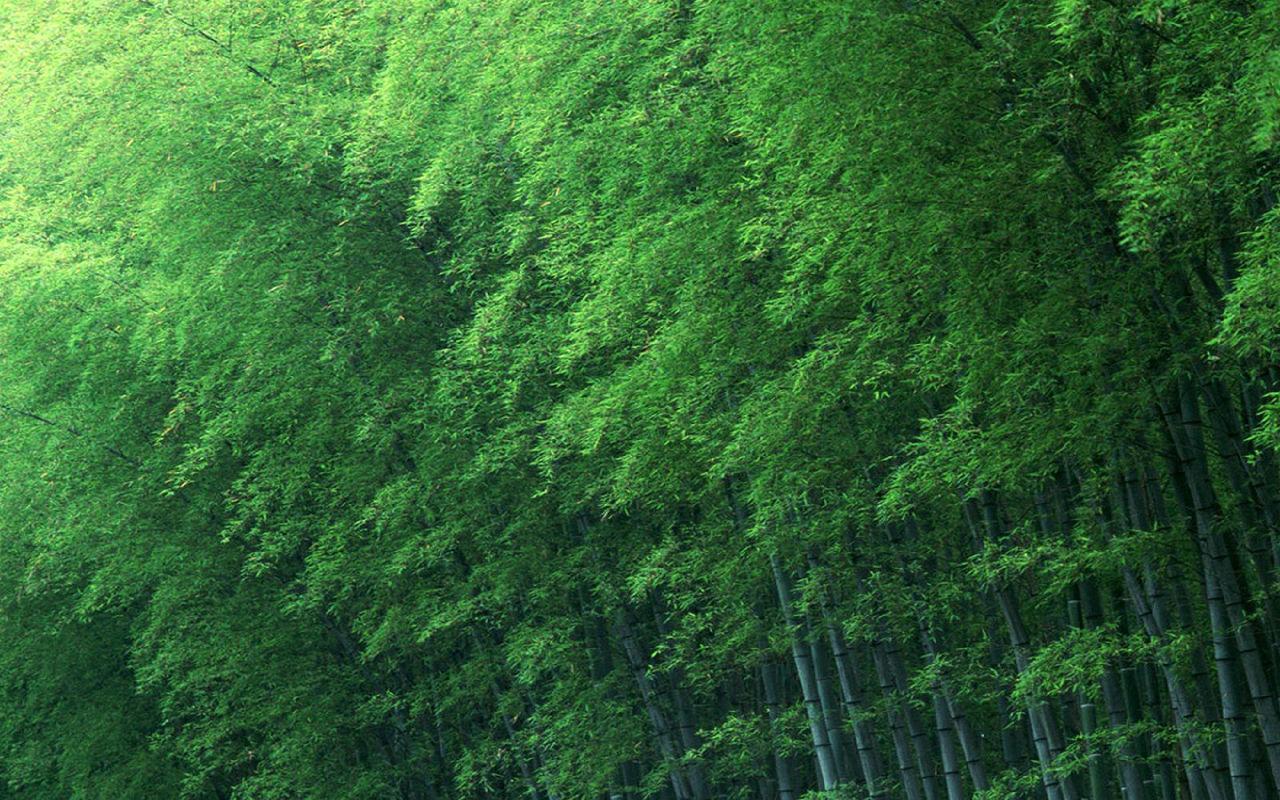壁纸 风景 植物 桌面 1280_800