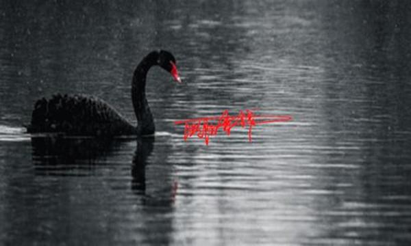 黑天鹅.jpg